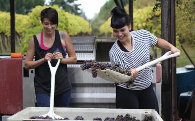 Great Northwest Wine – Harvest work lifts Washington somm's wine appreciation